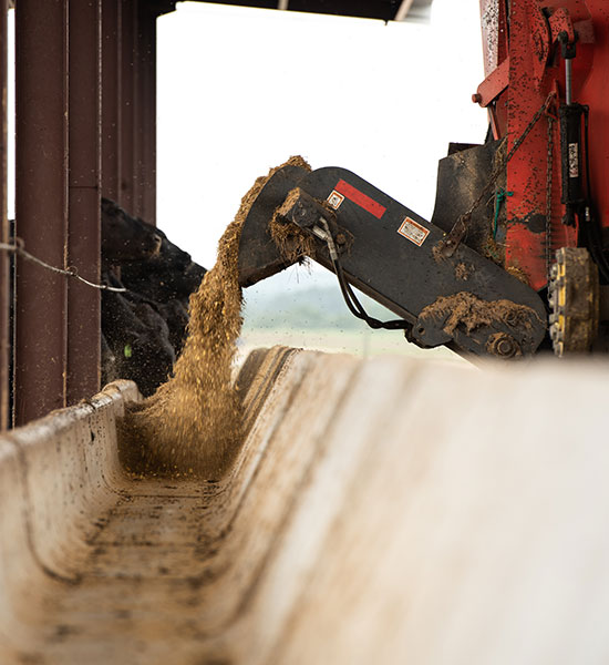 Learn How FPL Feeds Cattle